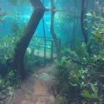 Heavy Rains Turn Brazilian Rainforest into Underwater Wonderland
