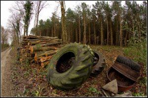 Hidden AI Sensors Could Stop Illegal Logging