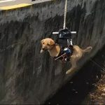 New Delhi Engineer Saves Dog With Customized Drone