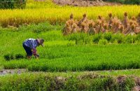 Nutrients in food reduced by climate change