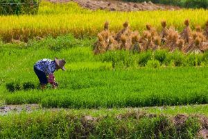 Climate Change May Reduce Levels of Nutrients in Food