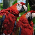 Bird Brains: Scientists Identify Secret Behind Intelligence in Parrots
