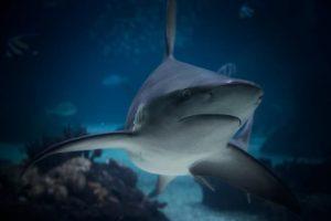 Deadly Sharks Heading to U.K. as Seas Warm Up