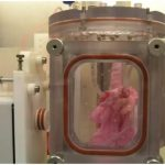 Scientists Transplanted Lab-Grown Lungs into Pigs — Are Humans Next?