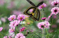 Pollinator Drones
