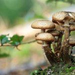 Plastic-Eating Mushrooms Will Turn Plastic Into Food