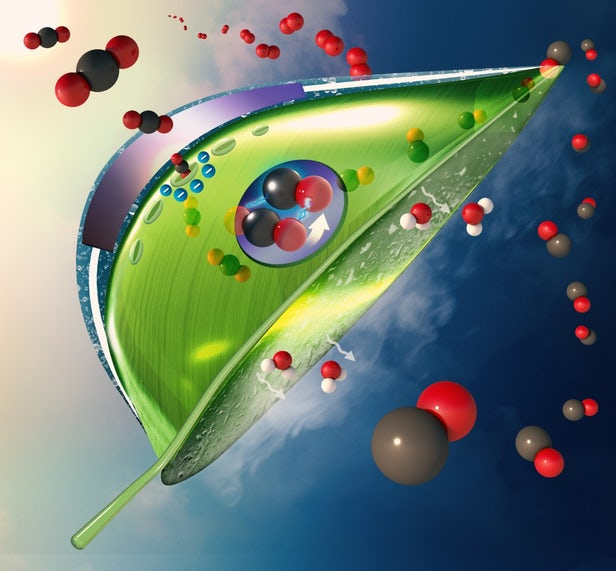 Scientists Have Developed Artificial Leaves Which Are Ten Times Better At Absorbing CO2 than the Real Ones