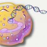 Genetic Tweak Enhances Intelligence
