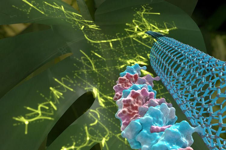 CARBON NANOTUBES IN PLANT GENE MANIPULATION