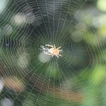 Unusual Property of Spider Silk to Be Used As Artificial Muscle for Robots