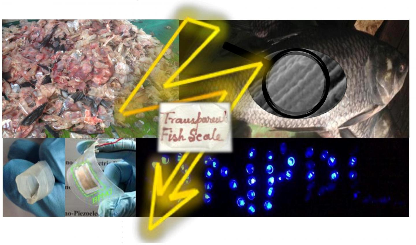 Nano Generator Powered by Fish Scales