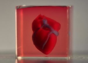 Israeli Scientists Print 'World's First 3D Printed Heart Using Human Tissue'