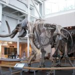 Scientists Will Soon Resurrect the Woolly Mammoth – But Should They?