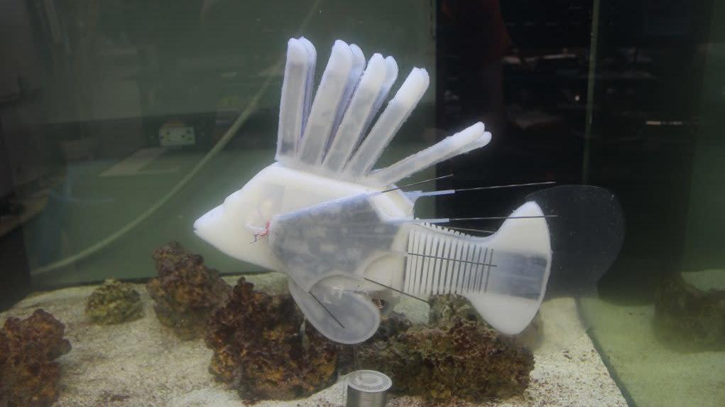 Robot Fish Powered By Blood-Like Battery Fluid Can Swim For Over 36 Hours