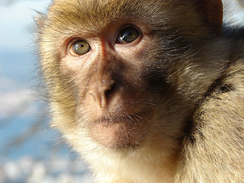 Scientists Create World's First Human-Monkey Hybrid in China