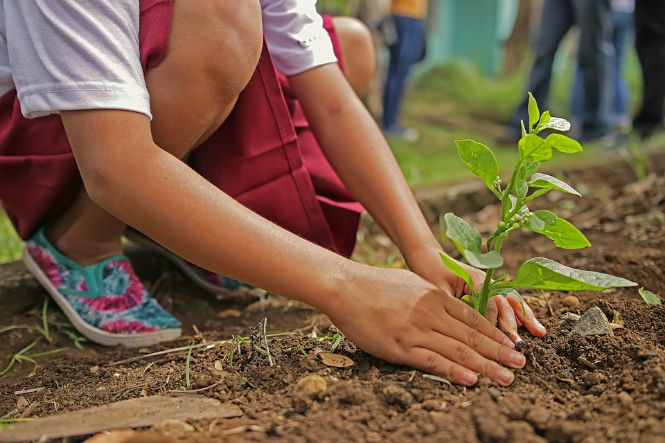 Ethiopia Planted Over 350 Million Trees in a Day