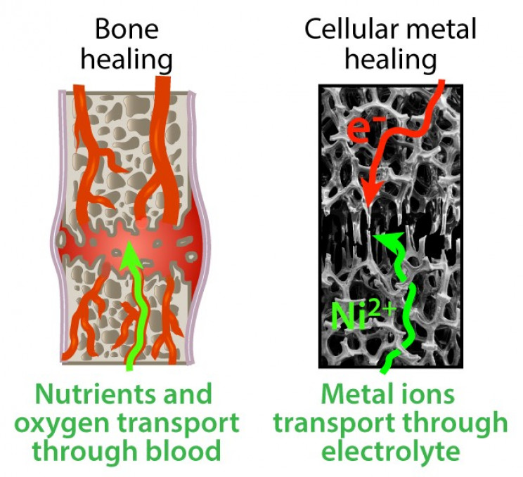 Bone-Like Metal Foam That Can Be 'Healed' At Room Temperature