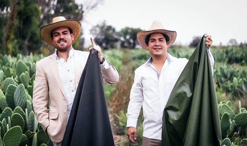 These Guys Have Created Vegan Leather From Cactus
