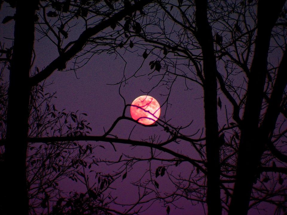 Next week's Rare 'Super Pink Moon' is Set to Stun