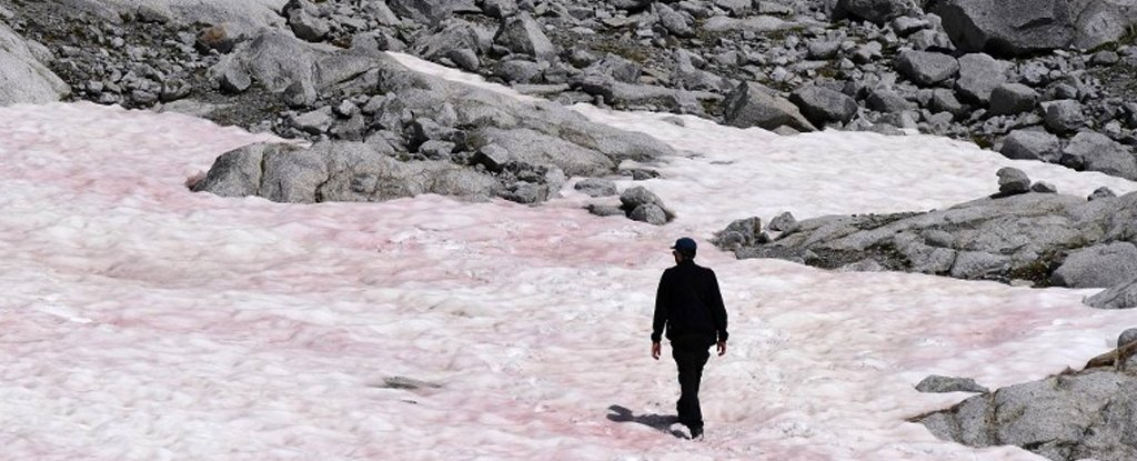 Mysterious Pink Snow on Italian Alps Could Have Dire Consequences