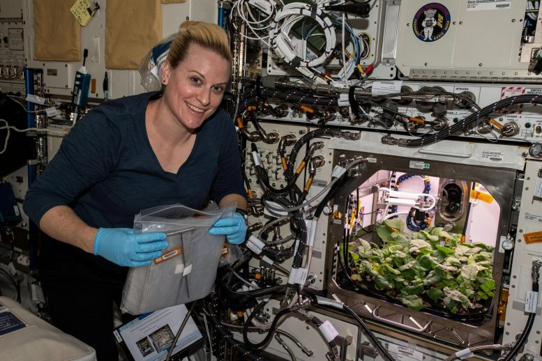 Astronauts Eat First Radishes Grown In Space