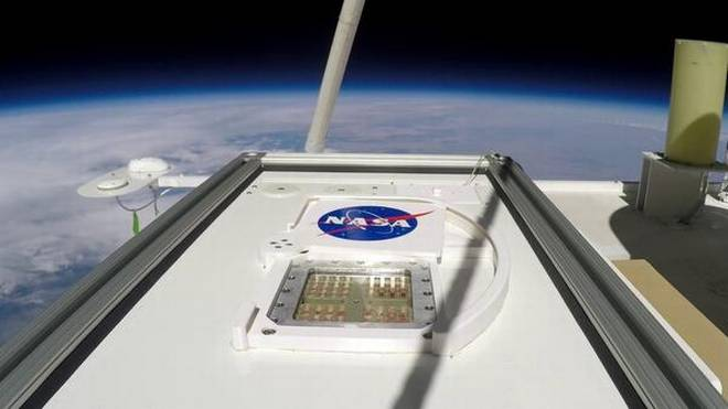 NASA study:Microbes from Earth could temporarily survive on Mars
