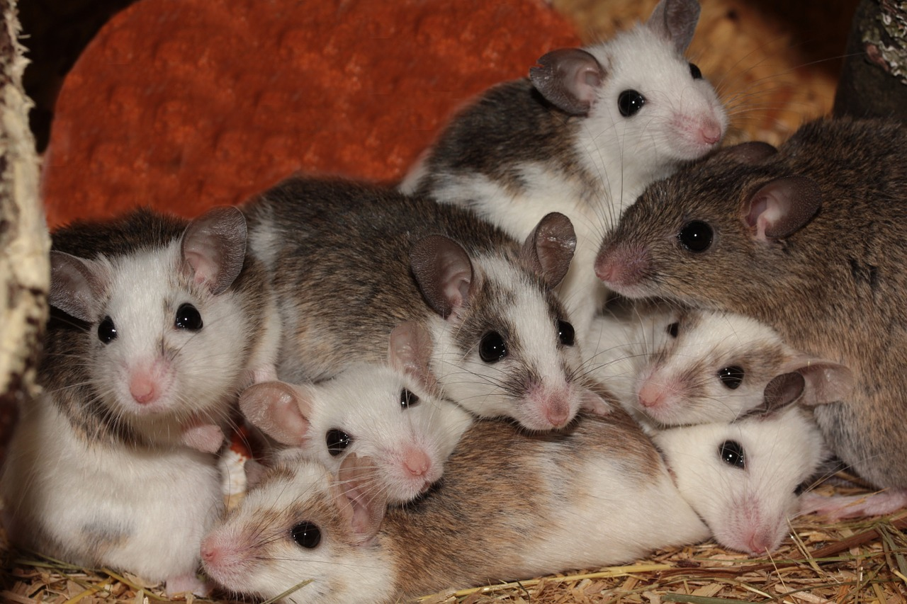 Mice Born From Sperm…That Was in Space! Wait…WHAT?