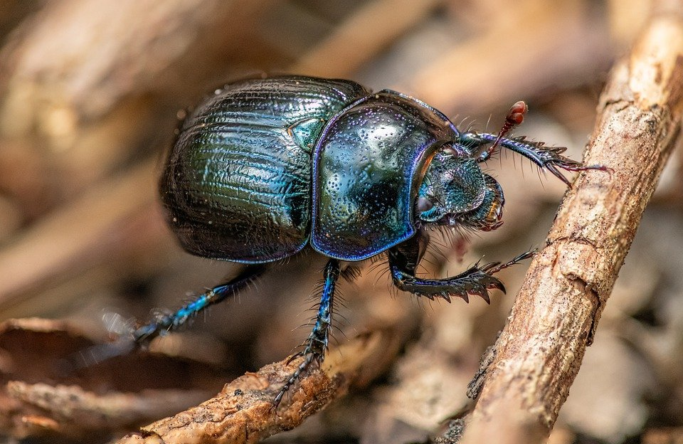 Lubricant Found In a Beetle's Leg Outperforms Teflon as a Lubricant