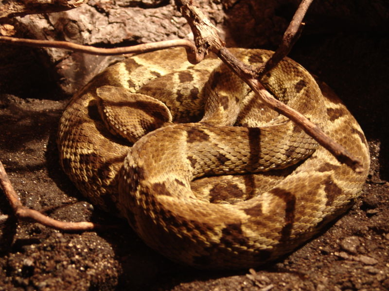 Wound-Sealing Glue from Snake Venom Can Stop Life-Threatening Bleeding In Seconds
