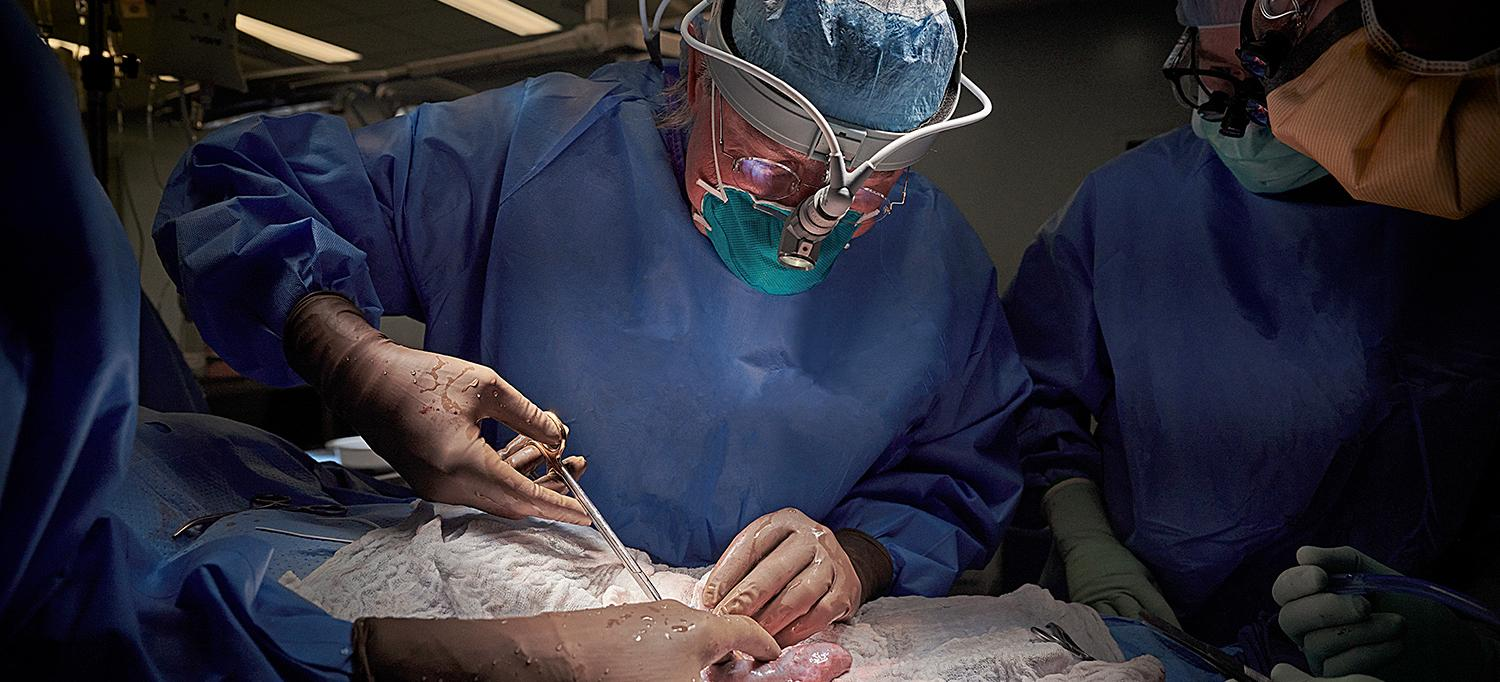 U.S. Surgeons Successfully Transplant a Pig Kidney to a Human for First Time Ever
